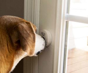 Smart Doggy Doorbell