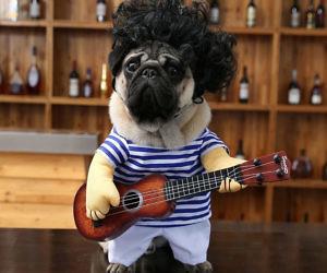 Guitar Player Pet Costume