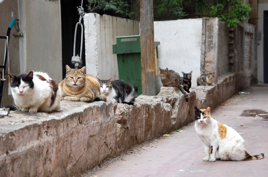 Cats lining the alley