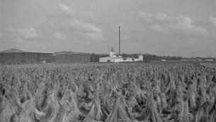 La zona de lino enriado en Unterschleissheim, como se veía en el Holocausto.  (Peter Vahlensieck)
