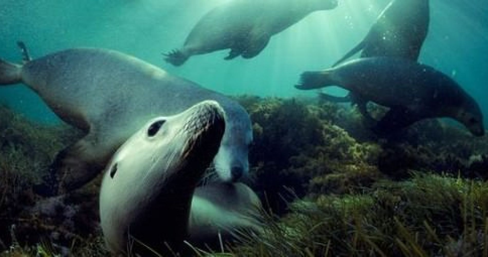 dolphin and seal swim