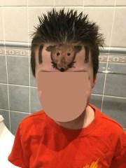 crazy hair day tutorials