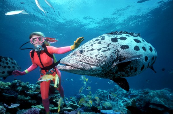 Great Barrier Reef Discovering Colorful Diversity
