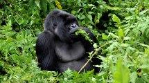 Culture & Wildlife Of Uganda Rwanda Adventures With
