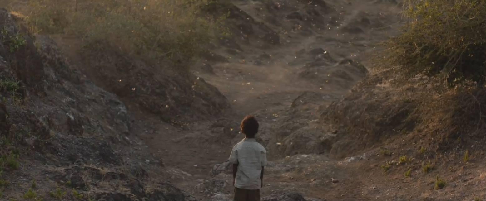 Risultati immagini per lion cinematography