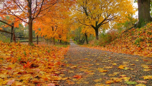 Central Park In Fall Wallpaper The Ultimate Halloween Fall Foliage Road Trip Travelpulse