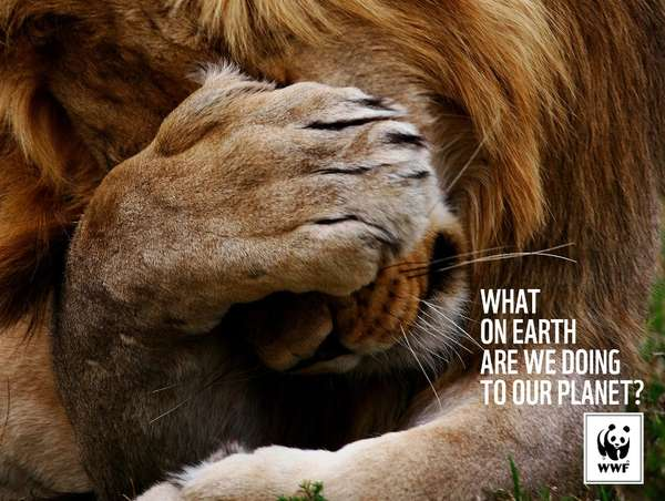 Wildlife Campaign