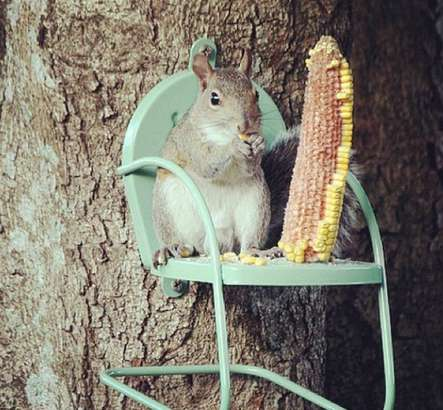 squirrel chair feeder 2 accent chairs personified photography :
