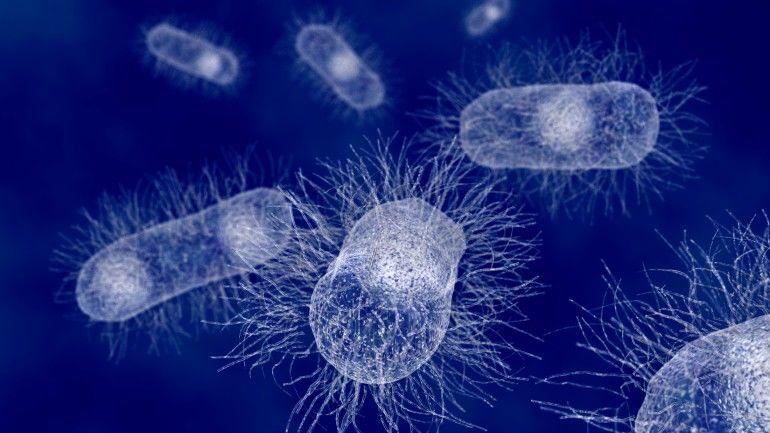 BacteriaKilling Textiles  Antibacterial Fabric