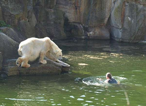Swimming With Polar Bears Shocking Video Shows Woman in