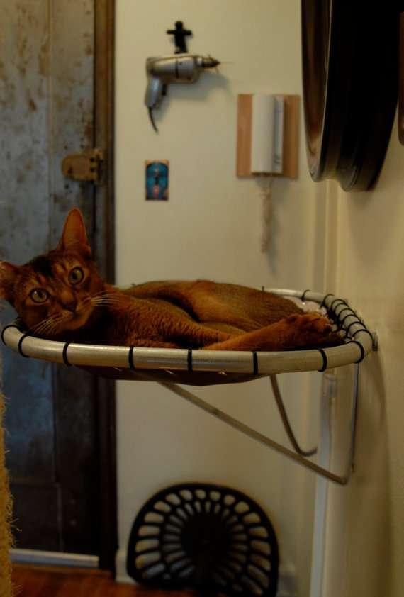 Levitating Pet Beds  Cat Hammock