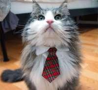 Formal Feline Accessories : Cat Necktie Collars