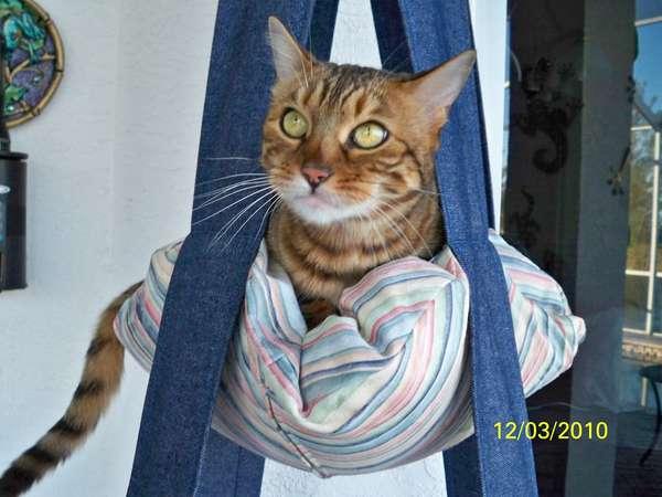 Flying Feline Furniture  cat swing