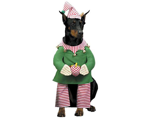 Christmas Costumes for Pets: Santa's Little Helper Dog