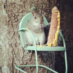 Relax Your Back Chair Core Ball Funny Furniture Rodent Feeders :