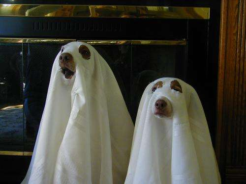 Ghost Dogs: Spooky and Peculiar Pet Pastimes