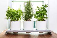Self-Watering Herb Pots : herb pots