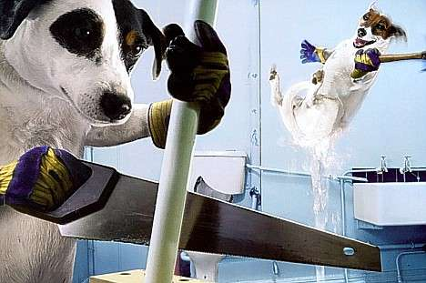 Humanizing Dogs Canines Doing Chores