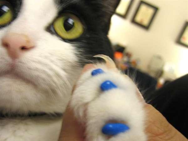 nail polish for cats