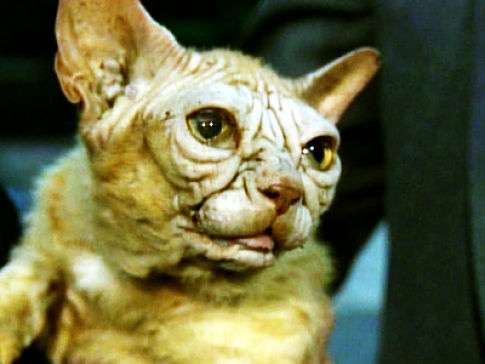 Yoda Cats 10 Felines From the Dark Side
