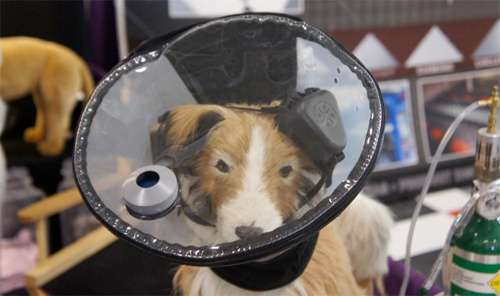 Canine Aviation Helmets : Supplemental Oxygen Supply Hood