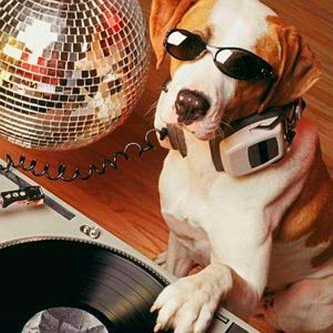 Nightclubs for Dogs  the Fetch Club