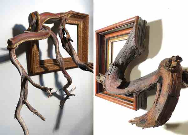 Tree Branch Wood Frames