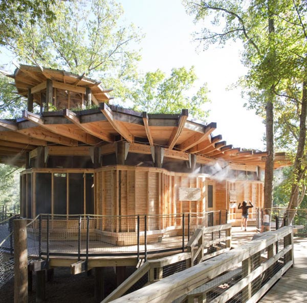 Timber Home Design – Lakefront Treehouse