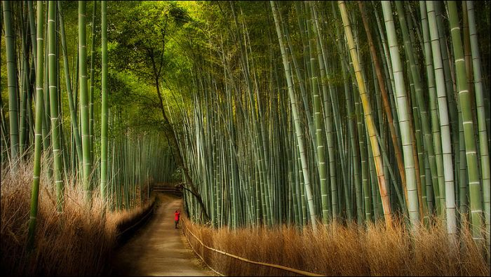 Arashiyama Yürüyüş Parkuru