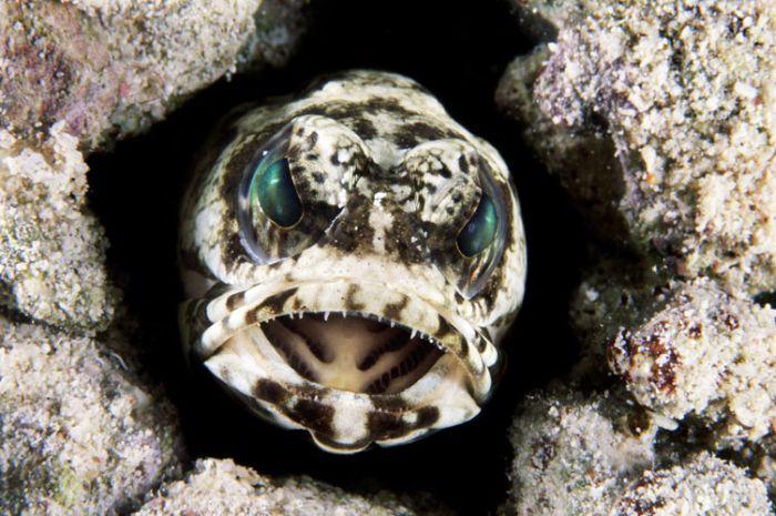 Deniz Canlılarından Görüntüler (28 Fotograf)