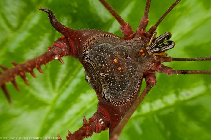 İnanılmaz Tropikal Böcekler (108 Fotograf)