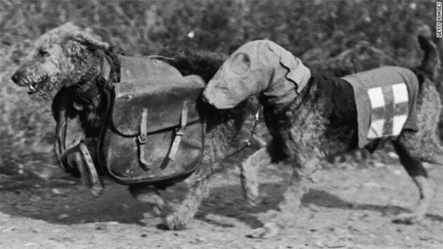 Birinci Dünya Savaşında Gaz Maskeli Hayvanlar (15 fotograf)
