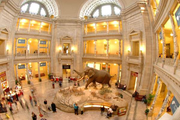 Smithsonian Natural History Museum Washington DC