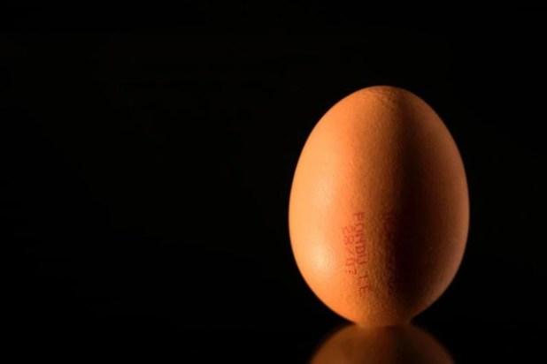Gà đẻ trứng có thuốc trị ung thư - Ảnh 1.