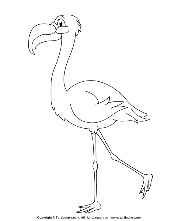 Flamingo Coloring Sheet Turtle Diary
