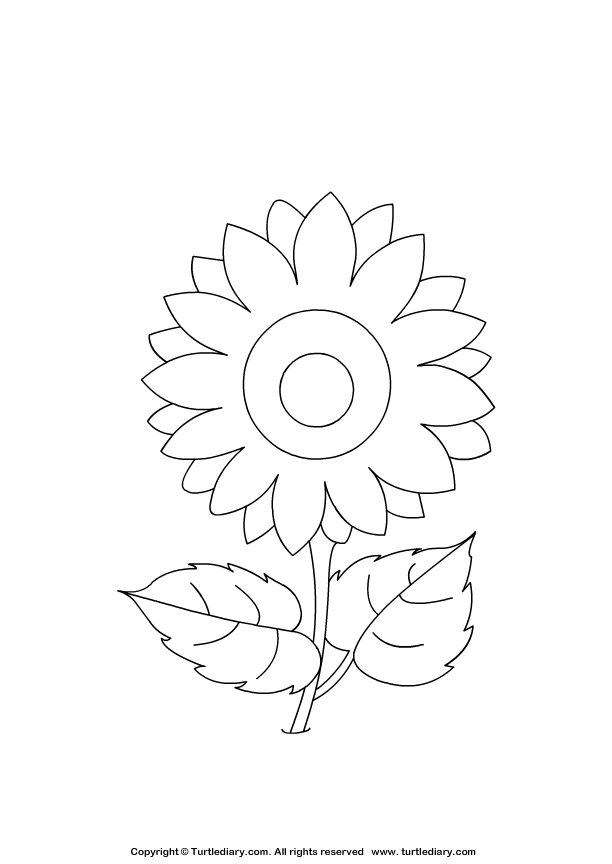 Sunflowers Preschool Coloring Pages