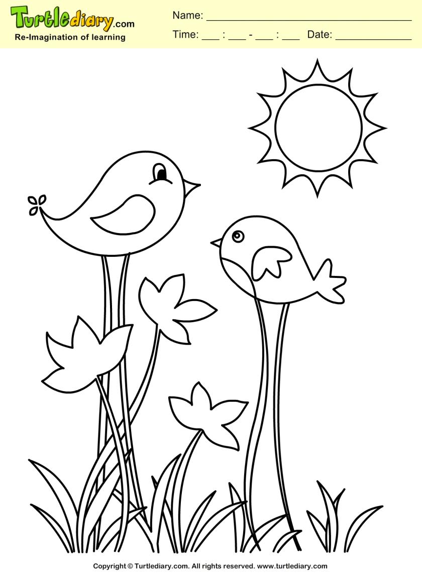spring bird coloring sheet  turtle diary