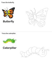 Butterfly Life Cycle Worksheet Worksheet - Turtle Diary