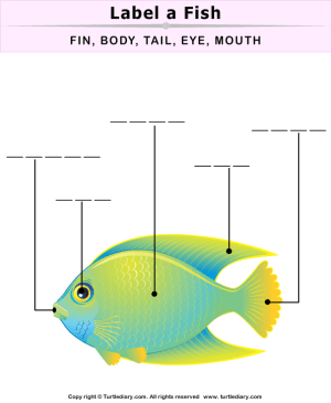 Fish Body Parts Worksheet  Turtle Diary