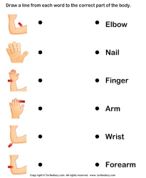 body parts human worksheet match names worksheets kindergarten science key turtlediary write arms question answer turtle
