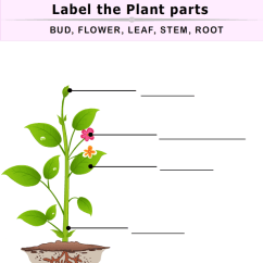 Diagram Of A Flowering Plant With Label York Wiring Diagrams The Parts Worksheet - Turtle Diary