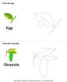 Trace The Stages Of The Butterfly Life Cycle Worksheets