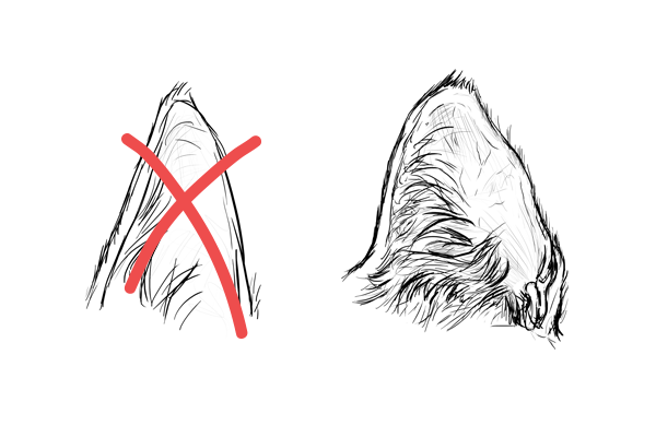 How to Draw Animals: Cats and Their Anatomy