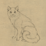 draw animals cats