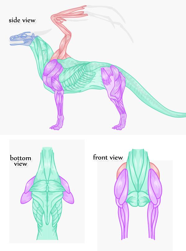 Dragon Side View : dragon, Rawr!, Anatomically, Correct, Dragon