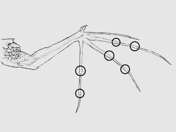 Echa a volar: una guía para principiantes sobre como