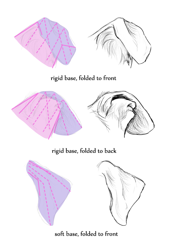 Wolf Ears Drawing : drawing, Animals:, Wolves,, Their, Anatomy