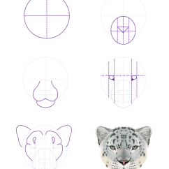 Snow Leopard Anatomy Diagram Ford Hei Ignition How To Draw Animals Big Cats Their And Patterns Drawingbigcats 5 Head Front