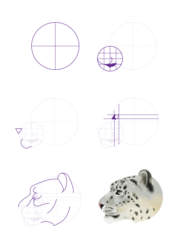 snow leopard anatomy diagram 7 wire cdi box wiring how to draw animals big cats their and patterns drawingbigcats 5 6 head profile