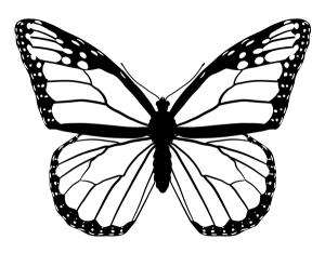 monarch draw butterfly butterflies wing patterns schmetterlinge mariposas line drawings animals mariposa step